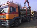 Hardwood  Logs For Sale Romania - Saw Logs, Poplar