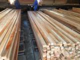Nadelschnittholz, Besäumtes Holz Fir North America Zu Verkaufen - Fir