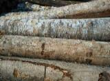Hardwood  Logs Demands - Veneer Logs, Birch (Europe)