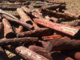 Tropical Wood  Logs For Sale - Pterocarpus angolensis