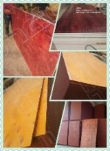 Plywood China - Pine shutter board/ Pine shutterply/ Pine shuttering plywood