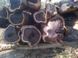 Tropical Wood  Logs For Sale - African Ebony logs
