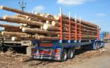 Find best timber supplies on Fordaq - New Timbermax Semitrailer Romania