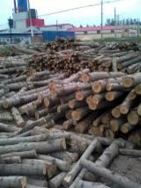 Hardwood  Logs - Poplar