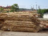 Firelogs - Pellets - Chips - Dust – Edgings Oak European For Sale - Wood Chips - Bark - Off Cuts - Sawdust - Shavings, Used Wood, Oak (European)