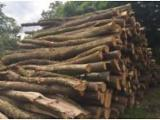Hardwood  Logs Germany - Industrial Logs, Alder (European Grey Alder) - Alnus Incana