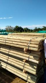 Find best timber supplies on Fordaq  cylindrical trimmed round wood, bolaina, FSC