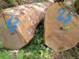 Hardwood  Logs - European White oak logs