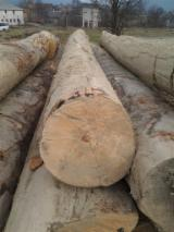 Hardwood  Logs - Beech logs Grade A, AB, B