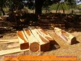 Tropical Wood  Logs For Sale - Saw Logs, Cocobolo Palissander, Nicaragua