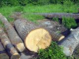 Hardwood  Logs China - Oak logs grade AB - BTrade Asia
