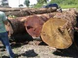 Tropical Wood  Logs For Sale - Industrial Logs, Gelekabbes/makkakabbes, Suriname