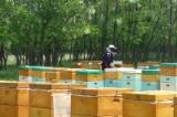 Pallets – Packaging For Sale - Beehives for sale