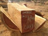 Tropical Wood  Logs - Doussie wood from Gambia