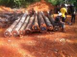 Tropical Wood  Logs - Industrial logs from Guyana