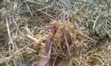 Ogrevno Drvo - Drvni Ostatci Piljevina Od Korišćenog Drveta - Piljevina Od Korišćenog Drveta Rumunija
