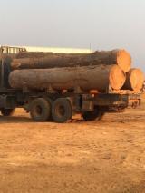 安哥拉 - Fordaq 在线 市場 - 木板, 绿柄桑木