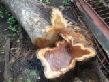 Dubeće Drvo Bez Certifikata - kostarika, Teca Tectona grandis