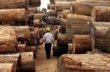 Tropical Wood  Logs - AZOBE