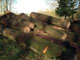 Hardwood  Logs For Sale - White Oak Logs, Red Oak Logs and other European Logs