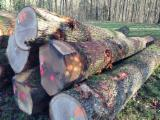Hardwood  Logs - White and red oak saw logs