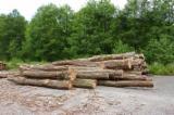 Hardwood  Logs Acacia - Saw Logs, Acacia
