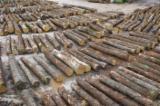 Hardwood  Logs Oak European - Oak saw logs M/BM