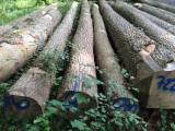 Hardwood  Logs - Buying ash logs from Europe