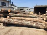 Hardwood  Logs - Saw Logs, Beech (Europe)
