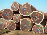 Tropical Timber For Sale - Find Your Business Partner On Fordaq - bubinga wood logs