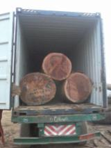 Exotic Wood For Sale - Register And Buy Tropical Wood Worldwide - we offer : AZOBE (ekki ) LOGS for prompt shipment