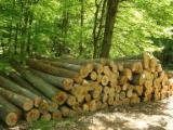 Hardwood  Logs Beech Europe For Sale - 1st sawing grade beech logs from Europe