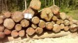 Hardwood Logs For Sale - Register And Contact Companies - 1st sawing grade white oak logs from europe