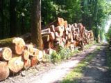 1st sawing grade poplar logs from Europe