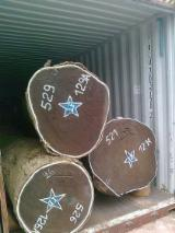 Tropical Wood  Logs Wenge - Wenge wood logs