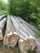 Find best timber supplies on Fordaq Saw Logs, Beech (Europe)