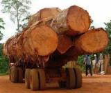 硬木原木待售 - 注册及联络公司 - 锯材级原木, 翼形红铁木