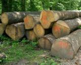 Kamerun - Fordaq Online Markt - Stämme Für Die Industrie, Faserholz, Doussie
