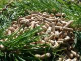 Firelogs - Pellets - Chips - Dust – Edgings For Sale Lithuania - Wood Pellets ENplus A1 6mm 100% FSC