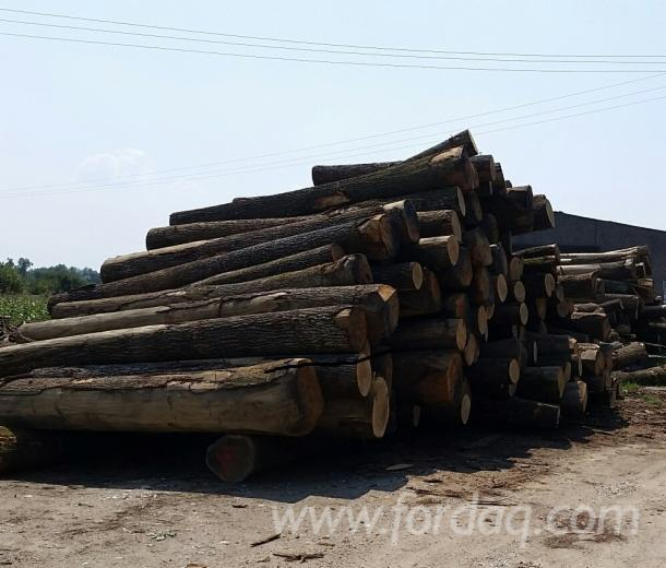 White-oak-logs