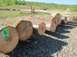 Hardwood  Logs - Red Oak Veneer Logs (All Grades)