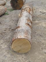 Hardwood  Logs - White Oak Veneer Logs (All Grades)