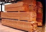 Standing Timber -  Timber available for sale in different species and sizes