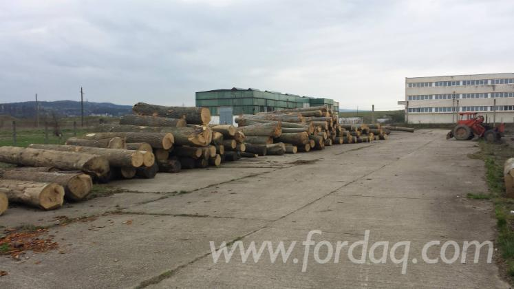 Sliced-wood-veneer-and-timber-producing-factory-for