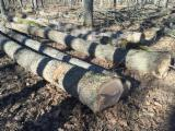 Selling white oak logs