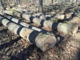 Selling white oak logs