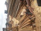 Raw Sawn Pine Loggs