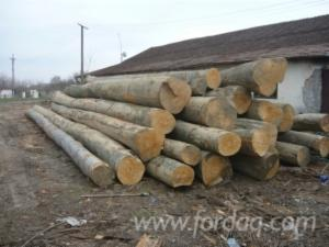 24--m-Beech-%28Europe%29-Saw-Logs-from-Romania