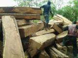 Tropical Wood  Logs Tali Missanda, Elune, Muave, Kassa - Rosewood,Papaon and Tali for sale