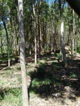 Woodlands Livable Buildings For Sale - For Sale African Mahogany Plantation (certified) 9 years old, ready to make the first cut.